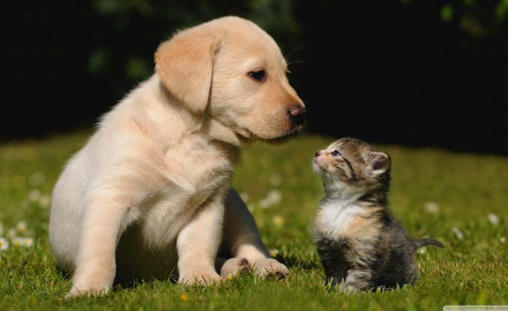 cat-and-dog-cute-wallpaper